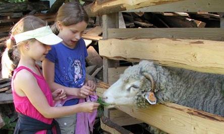 Gospodarstwo agroturystyczne ze zwierzętami