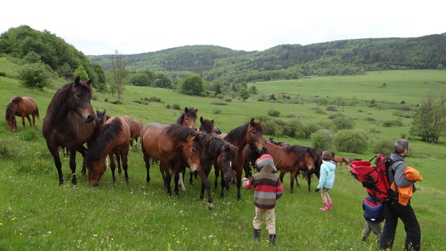 Huculskie konie w Beskidzie Niskim
