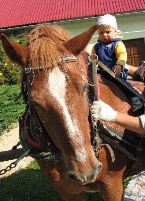 Agroturystyka z dzieckiem konie