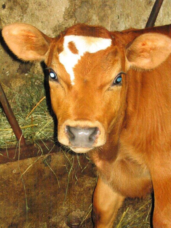 Agroturystyka dla dzieci ze zwierzętami