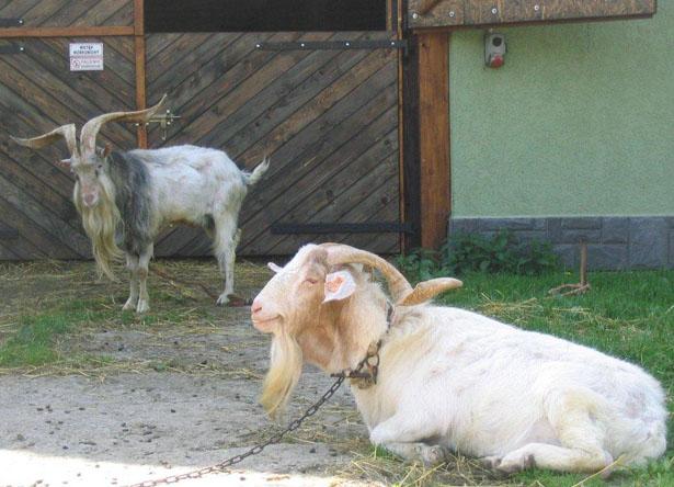 Gospodarstwo agroturystyczne zwierzęta